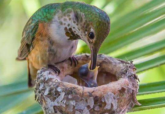 Life Is Beautiful: Mama Allen's Hummingbird