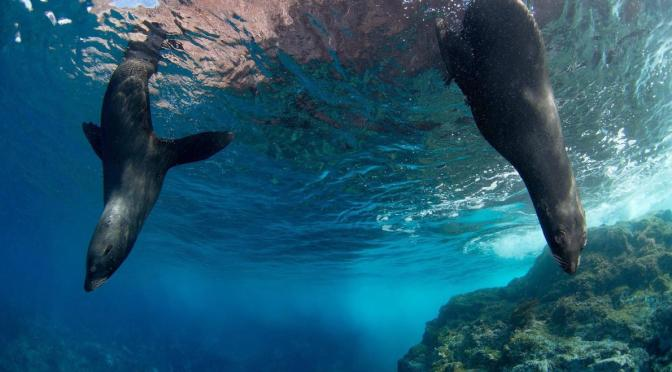 Chile Creates Largest Marine Reserve in the Americas