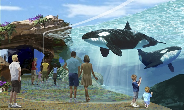 California bans captive breeding of SeaWorld killer whales