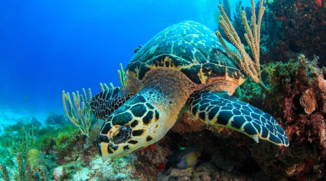 Scientists Just Found a Sea Turtle That Glows
