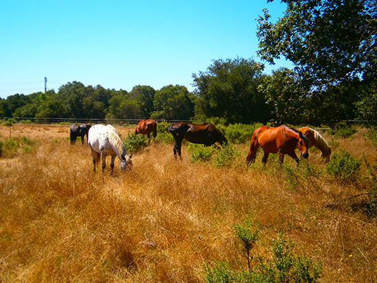 Saving Horses, Saving Land