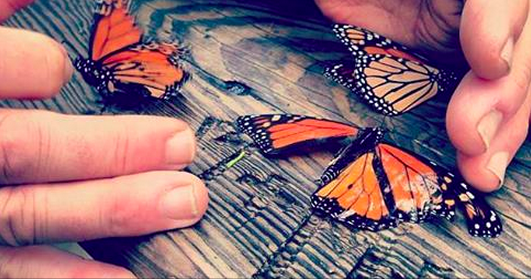 Partnership Creates California's New Monarch Highway
