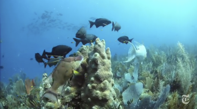 Video Story: Cuba and U.S. Agree to Work Together to Protect Marine Life