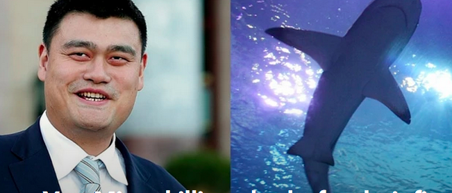 Thanks to Yao Ming, killing sharks for their fins is down 50%