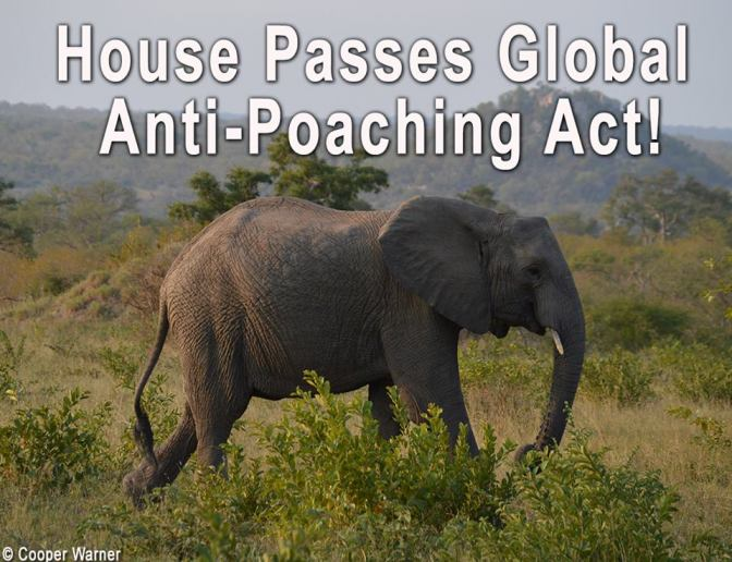 U.S. House Passes Badly Needed Anti-Poaching Bill
