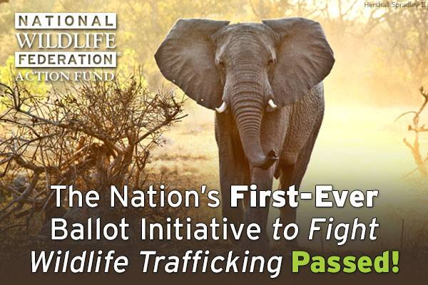 Washingtonians Vote to Protect Wildlife