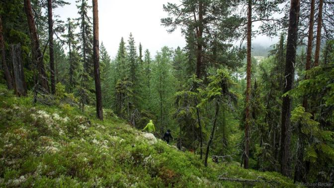 How Norway Saved (and is Rebuilding) Its Vast Forests
