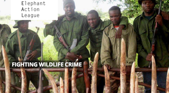 """The Devil,"" East Africa's Most Wanted Elephant Poacher, Arrested"